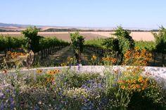 Top 10 wineries - Walla Walla Vineyard - http://delishhh.com/2010/08/10/top-wineries-in-walla-walla-wa/# #seattle