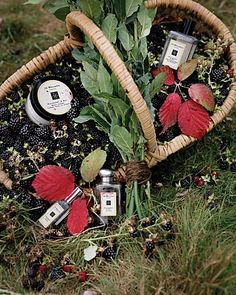 Jo Malone London Blackberry & Bay Collection | Bloomingdale's