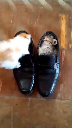 Cute Baby Cats Funny Kittens Videos - La mejor imagen sobre healthy recipes para tu gusto E - Cute Baby Cats, Funny Cute Cats, Cute Little Animals, Cute Cats And Kittens, Cute Funny Animals, Kittens Cutest, Cute Babies, Funny Kittens, Ragdoll Kittens