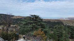Tannourine Cedars