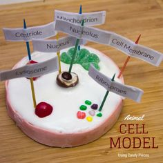 And idea for creating an animal cell model using candy as the parts of the cell.