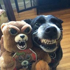 Feisty Pets. Love this dog's smile! Follow RUSHWORLD on Pinterest! New content daily, always something you'll love!
