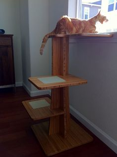 Winston needs one like this so he can actually get his huge self up to see out the window. LOL