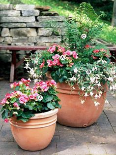 Create an Explosion of Color        Similar pots in different sizes planted to echo each other present a clean and elegant display. We love the use of a fern to add height and extra interest.        A. Reiger begonia (Begonia 'Charisma Pink') -- 6      B. Fuchsia 'Hidcote Beauty' -- 3      C. Wood fern (Dryopteris clintoniana) -- 1