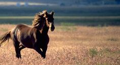Horse... One of the most magnificent creatures...