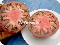 Zaad winnen van uw tomaten: werkwijze met foto's tomaten zaden oogsten