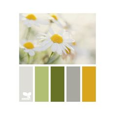 Design-seeds.com ❤ liked on Polyvore Daisy Girl :))
