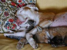 Dog + cat + fox = sweet dreams