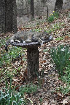 Cat nap or bird bath? I Love Cats, Cute Cats, Funny Cats, Funny Animals, Cute Animals, Adorable Kittens, Animal Gato, Amor Animal, Crazy Cat Lady