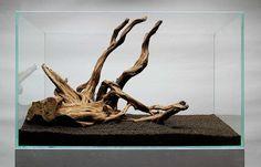 Znalezione obrazy dla zapytania korzeń japoński do akwarium