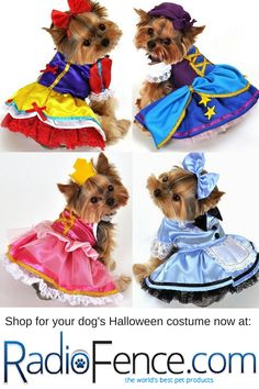 Puppy Halloween Costumes, Cute Dog Costumes, Yorkie Clothes, Pet Clothes, Dog Accesories, Dog Clothes Patterns, Dog Sweaters, Dog Dresses, Baby Animals