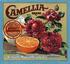 Citrus Label Collection / Camellia Brand (2).jpg