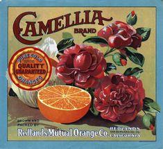 Citrus Label Collection / Camellia Brand (2).jpg