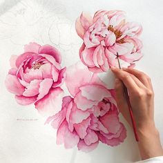 It's time to bloom peonies! There will be a progress video of the peonies blooming! Peonies And Hydrangeas, Purple Peonies, Peonies Bouquet, Peonies Garden, White Peonies, Black Peony, Peony Drawing, Peony Painting, Peony Flower Tattoos