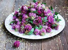 Zachwycenia: Syrop z czerwonej koniczyny Edible Flowers, Garden Design, Herbalism, Cabbage, Vegetables, Health, Plants, Alice, Style
