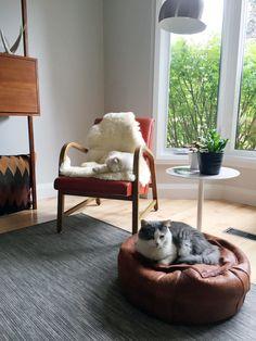 Monday's pets onfurniture - desire to inspire - desiretoinspire.net