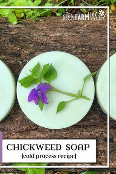 This extra gentle herbal soap features skin soothing chickweed and shea butter. It's coconut-oil free which makes it perfect for those who are allergic or extra-sensitive to coconut. Melt And Pour, Tea Places, Homemade Soap Recipes, Herb Recipes, Infused Oils, Lotion Bars, Cold Process Soap, Beauty Recipe, Home Made Soap