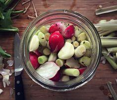 Fermented Cattail Shoot Pickles #Cattails, #Fermenting, #Foraging #FoodStorageandPreservation