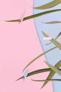 Rose Quartz and Serenity, Pantone Color for 2016 Creative Studio, Rose Quartz Serenity, Hanging Fabric, Plant Images, Vintage Art Prints, Modern Wallpaper, Aesthetic Themes, Paper Roses, Cool Walls