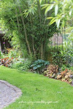 Simple Ein Schweizer Garten Buchsbaumpilz ein m glicher Ersatz wie man Heuchera Stecklinge gewinnt