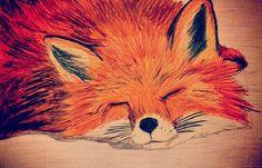 Sleepy fox - lapiz sobre papel