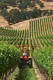 Del Rio Vineyards in southern Oregon