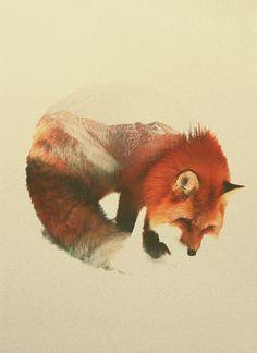 Le norvégien Andreas Lie mélange des photographies d'animaux et de paysages qui deviennent leurs fourrures en utilisant une technique qui donne l'impression qu'il a réalisé les images en faisant deux expositions sur la même photo.