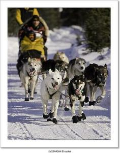 Wallmonkeys Iditarod Peel and Stick Wall Decals in H x 40 in W) * Visit the image link more details. (This is an affiliate link) Wall Stickers, Wall Decals, Alaskan Dog, Contemporary Romance Novels, Phoenix Art, Skyline Art, Home Decor Wall Art, Canvas Art Prints, Poster Prints