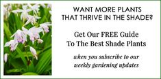 Shade Loving Shrubs: 15 Beautiful Bushes To Plant Under Trees - Gardening @ From House To Home Best Plants For Shade, Shade Loving Shrubs, Shade Shrubs, Cool Plants, Perennial Ground Cover, Ground Cover Plants, Garden Bulbs, Shade Garden, Garden Plants