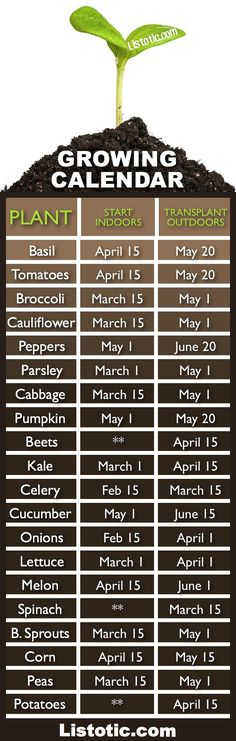 Plant Your Vegetable Garden ⋆ Listotic Vegetable garden growing calendar with starting and transplanting dates. If only I had a green thumb.Vegetable garden growing calendar with starting and transplanting dates. If only I had a green thumb. Veg Garden, Garden Types, Lawn And Garden, Terrace Garden, Veggie Gardens, Vegetables Garden, Potager Garden, Spring Garden, Garden Planters