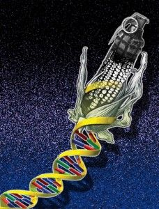 Scientist #MaryMangan takes a look at the #controversy over a study that suggest #microRNAs from commonly eaten #GM plants could alter the #physiology of animals, including humans, and cause harm. What does the reality of the science behind such claims actually attest to?