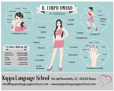 Learn Italian words: il corpo umano - an infographic