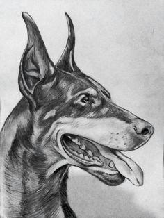 Doberman pencil drawing