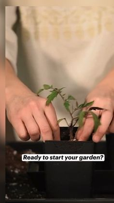 Hydroponic Farming, Hydroponics, Starting A Garden, Seed Starting, Indoor Vegetable Gardening, Garden Plants, Garden Projects, Garden Ideas, Old Bras