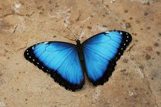 Media Tweets by Judy Whitton (@JudyWhitton)   Twitter #butterfly #photography