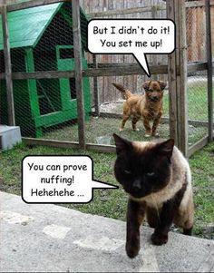 cat & dog funny - Animal Humor Photo (19955504) - Fanpop