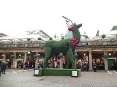 One reindeer spotted in Covent Garden, London for the Christmas season.