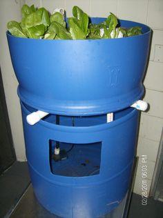 Single barrel Aquaponics