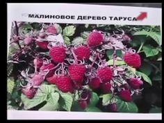 Малина.Мастер класс.Марина Рыкалина и Виталий Декабрев. - YouTube