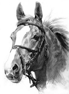 Equine Fine Art: Pencil, Charcoal & Pastel Horse Drawings (Dunway Enterprises) Pencil Drawing (HORSE)