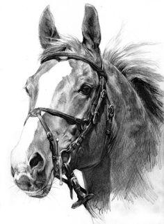 Chestnut Stallion by Define-X.deviantart.com on @deviantART