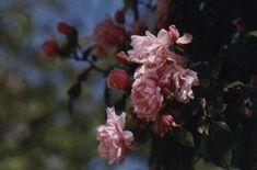 Giverny Monet Garden flowering Calendar