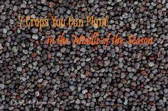 7 crops you can plant midseason.