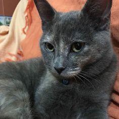 #Mini tremenda a sus 8 meses. #gatos #cats_of_instagram