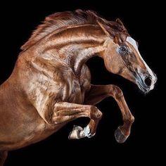 "Polubienia: 845, komentarze: 1 – Қазақ Елі (@kazgyrt_horses) na Instagramie: ""Құзар шыңда ойпаңда-бұралаңда, Талайларды сын күтіп тұрады алда.. #сәттілік #қазақелі"""