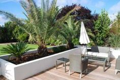 Contemporary Garden seating area using architectural plants to buy online UK Front Garden Landscape, Small Front Yard Landscaping, House Landscape, Garden Seating, Outdoor Seating Areas, Palm Trees Garden, Garden Plants, Small Patio Spaces, Tropical Patio