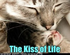 The Kiss Of Life..