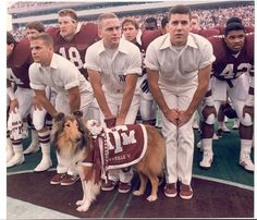 Reveille V was a descendant of a championship purebred American collie. She was chosen from 2000 puppies because of her lineage and her marking. In December 1984, Reveille V was brought to campus, and her first official appearance as Texas A & M mascot came at a basketball game on Jan. 11, 1985. During her tenure, she attended every football game, all home basketball games and many baseball and volleyball games. A mischievous dog, Reveille V often stole erasers from chalkboards during class.