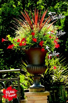 You don't have to be a garden guru to create stunning container Here's the . HCYou don't have to be a garden guru to create stunning container Here's the . Outdoor Flowers, Outdoor Plants, Outdoor Gardens, Potted Plants, Container Flowers, Container Plants, Container Gardening, Succulent Containers, Container Design