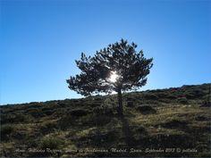 Alone. Hillsides Najarra. Sierra de Guadarrama. Madrid. Spain
